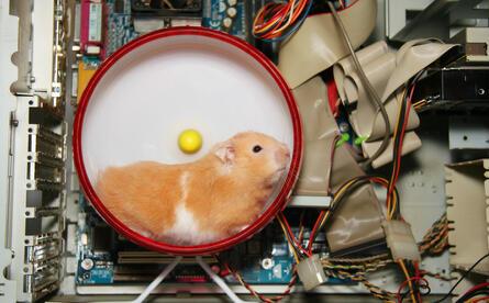 Name:  Hamster.jpg Views: 149 Size:  34.6 KB